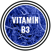 mandrotest ingredient vitamin b3